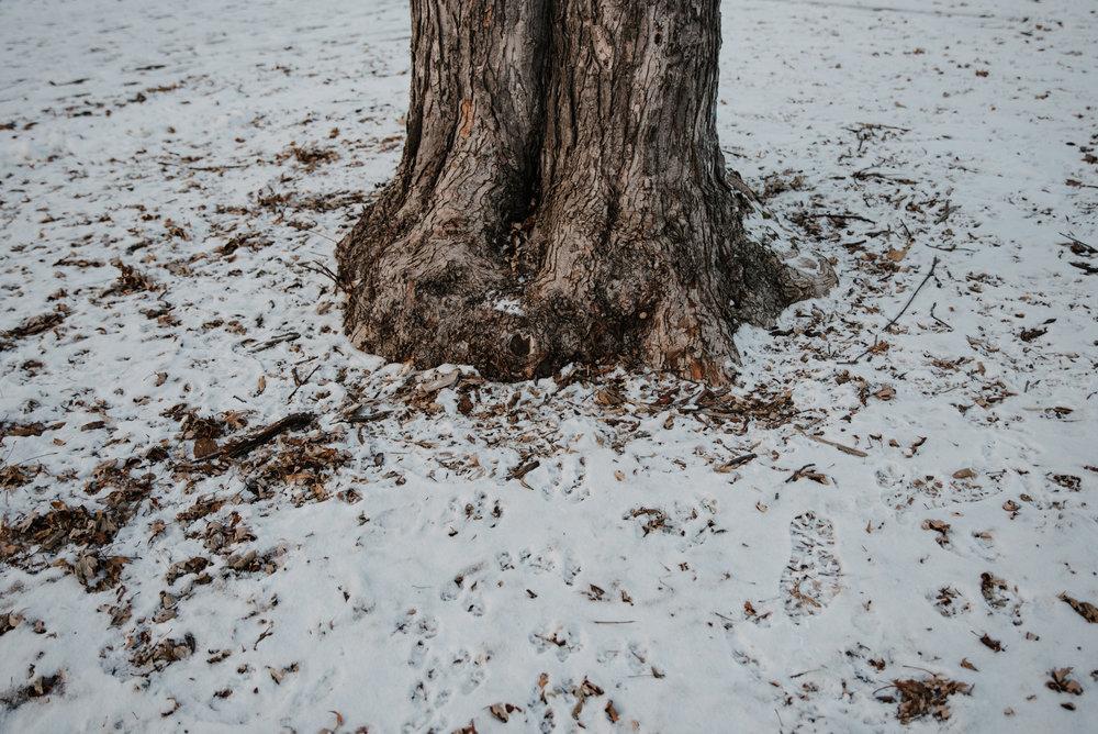 007-photo-dun-leger-couvert-de-neige-traverse-de-pas-au-pied-d-un-arbre-parc-photographe-a-montreal-1186.jpg