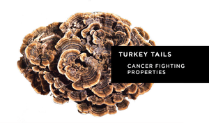 Turkey Tails.png