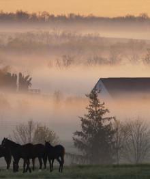 horse_farm-220x262.jpg