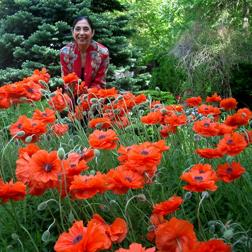 Poppies are now in bloom in Angie's garden!