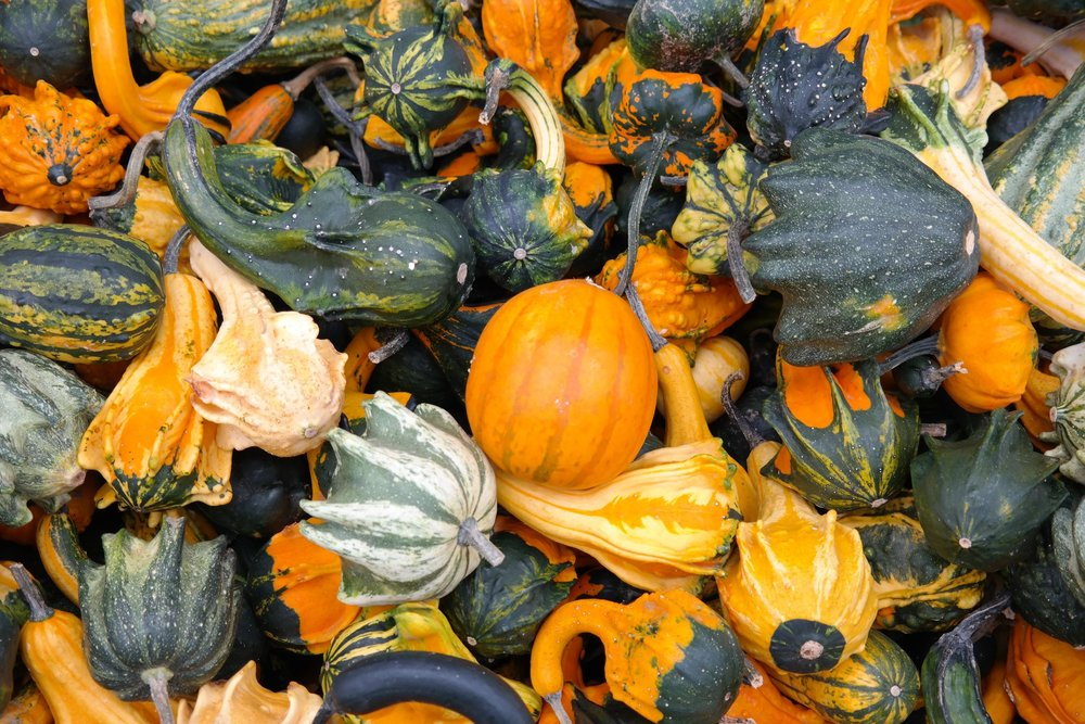 pumpkins-decorative-squashes-green-autumn-62286.jpeg