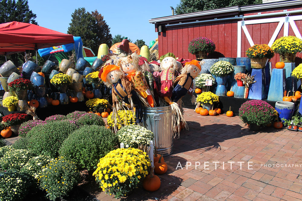 Fall-Festival-Reston-Farm-Market-VA-019.jpg
