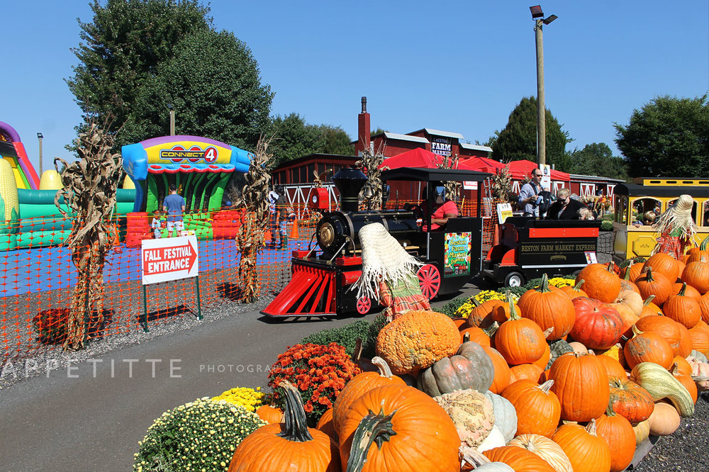 Fall-Festival-Reston-Farm-Market-VA-026.jpg