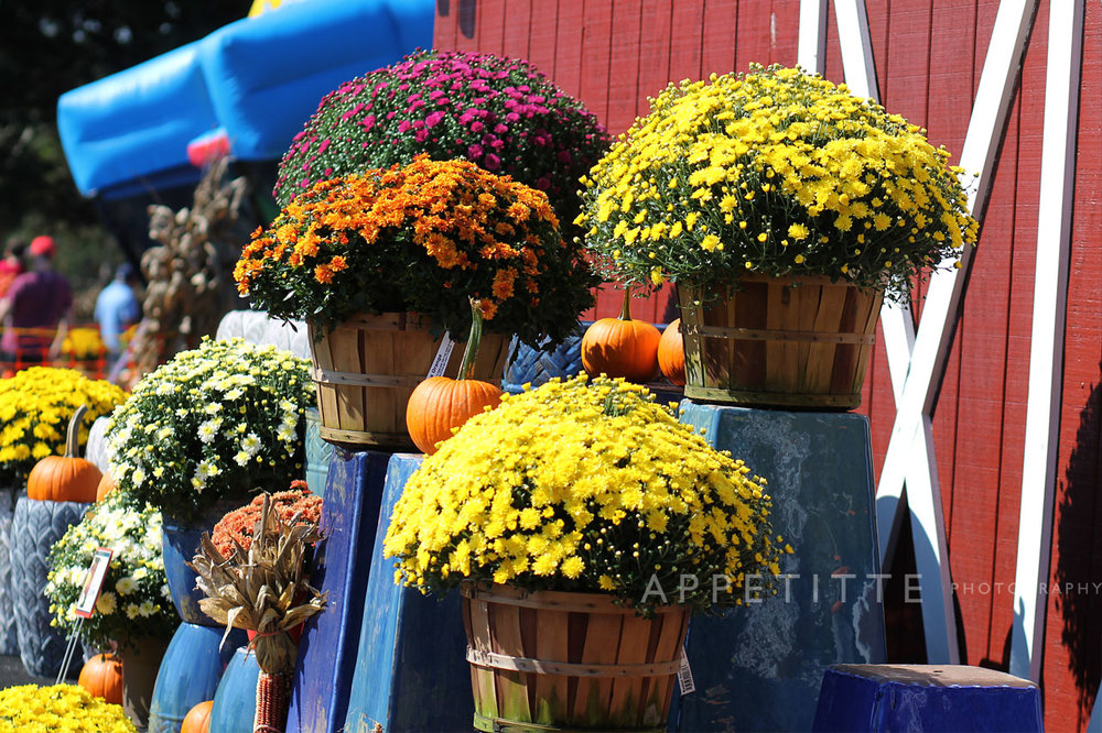 Fall-Festival-Reston-Farm-Market-VA-068.jpg