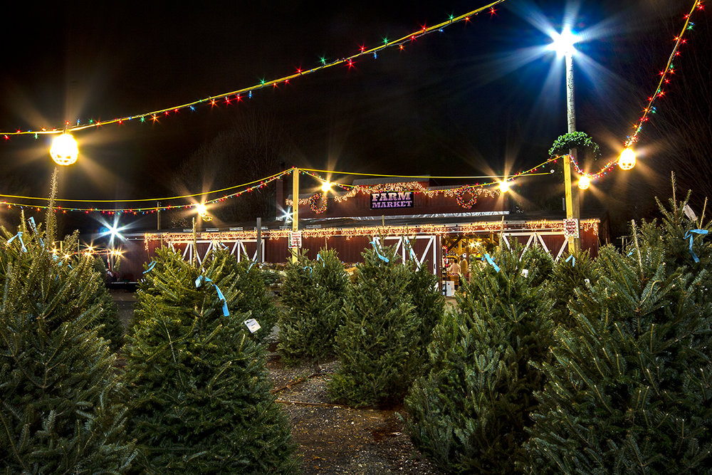 winter-season-christmas-trees-reston-farm-market-va (10).jpg