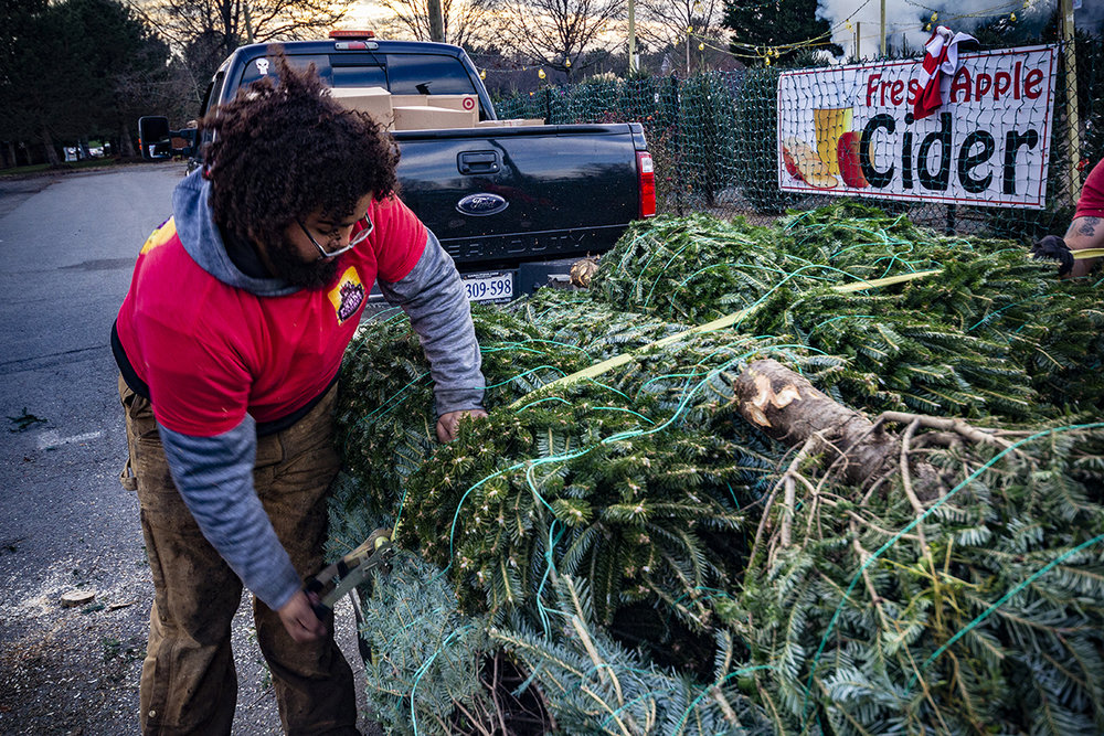 winter-season-christmas-trees-reston-farm-market-va (3).jpg