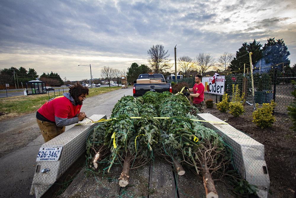 winter-season-christmas-trees-reston-farm-market-va (2).jpg
