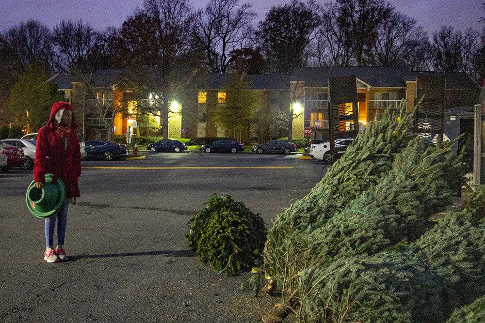 winter-season-christmas-trees-reston-farm-market-va (7).jpg