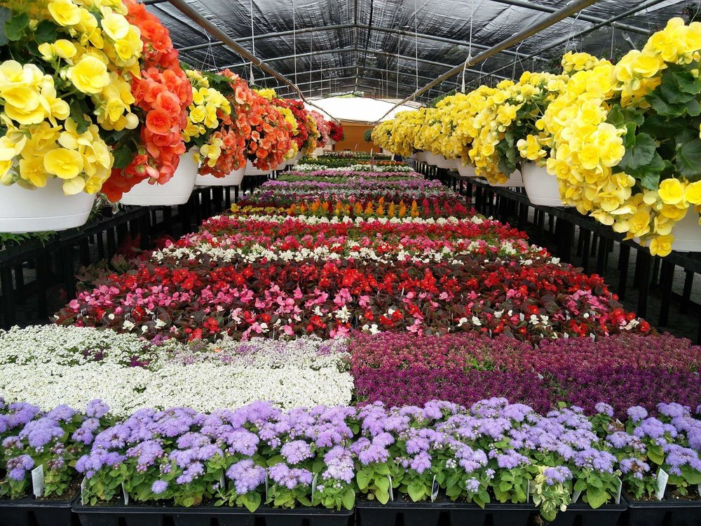 flower stand pics.jpg