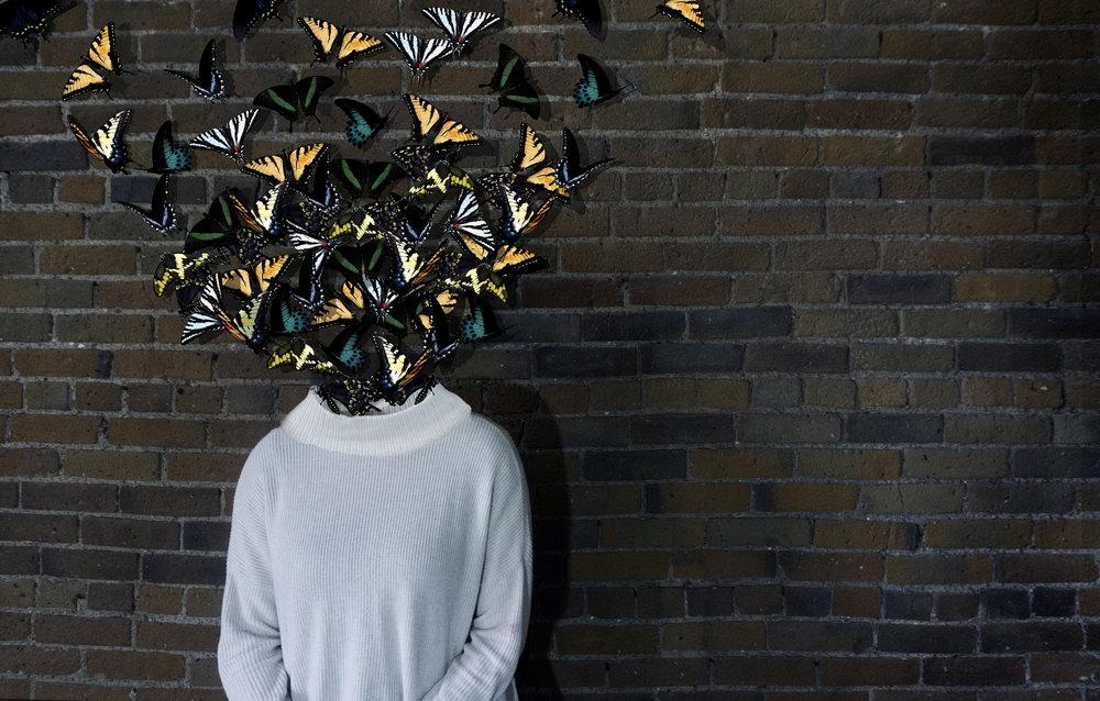 Papilionidae, photograph, 2017.jpg