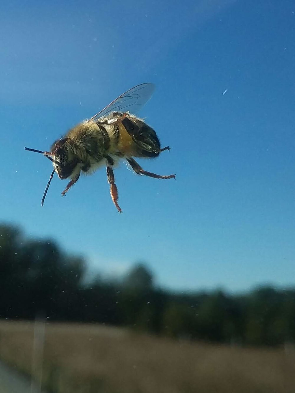 We love seeing bees buzzing around the farm!