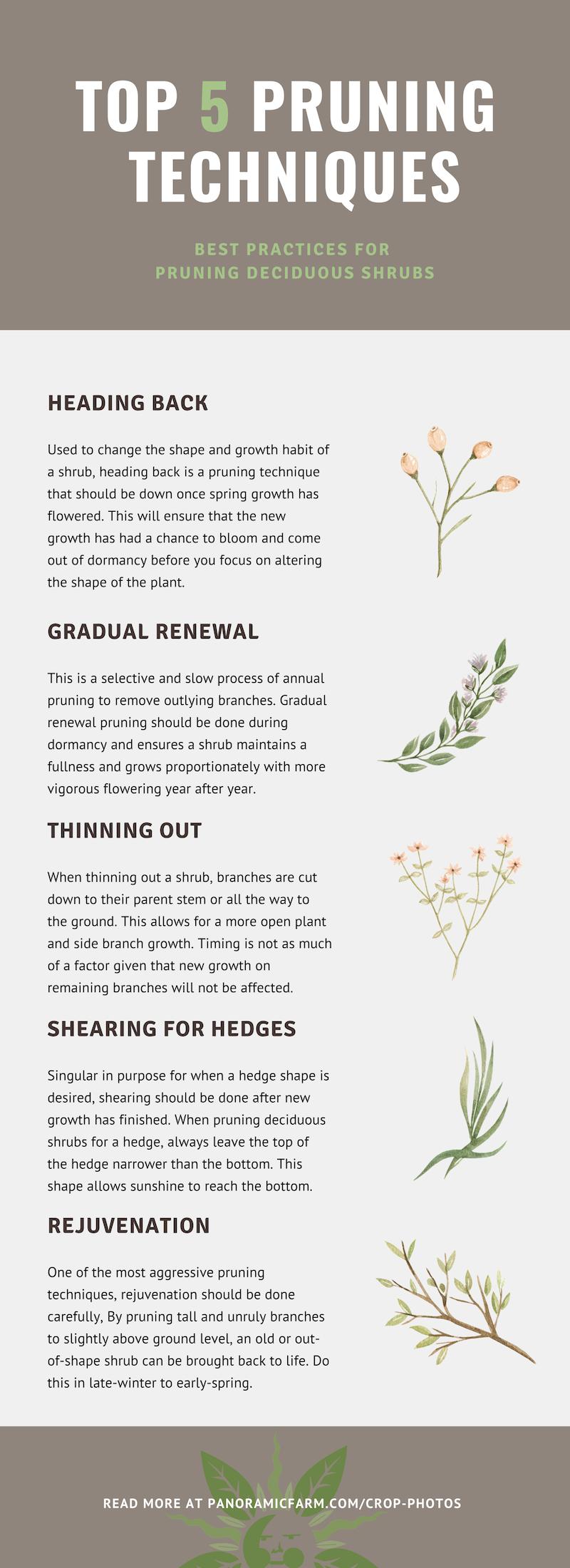 Sources: https://www.mortonarb.org & https://aggie-horticulture.tamu.edu