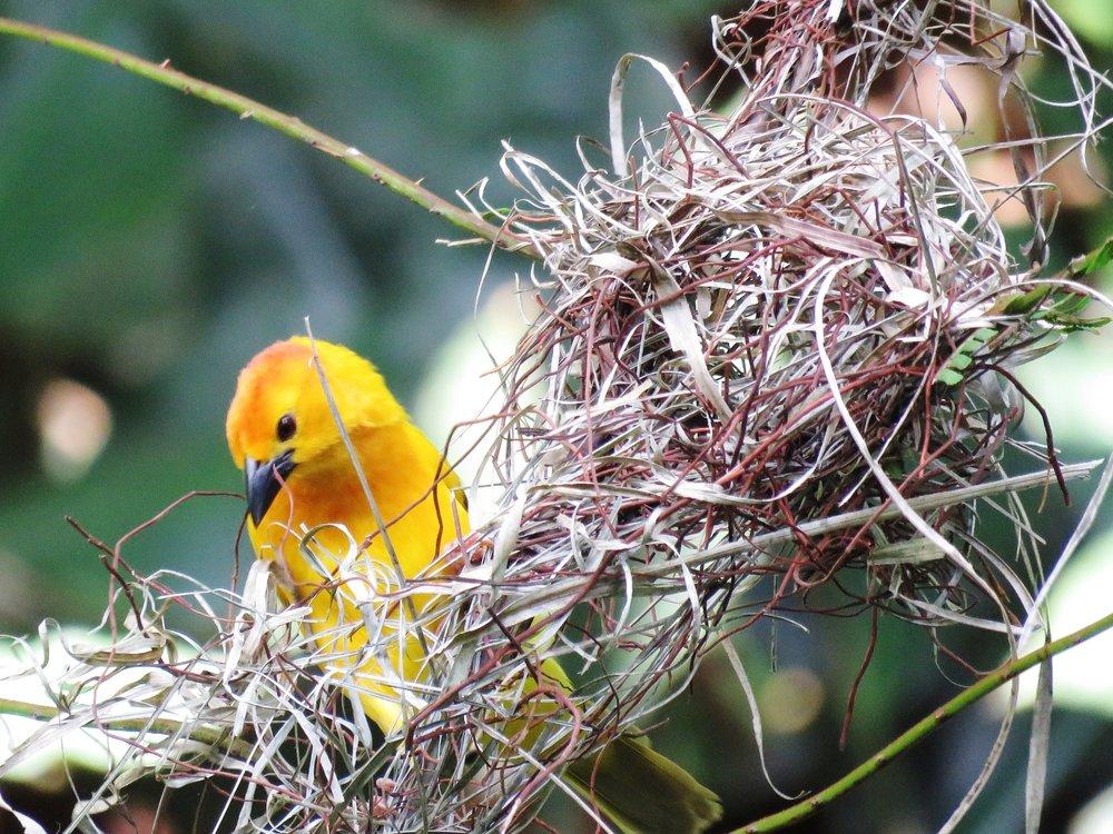 animal-avian-beak-532954.jpg