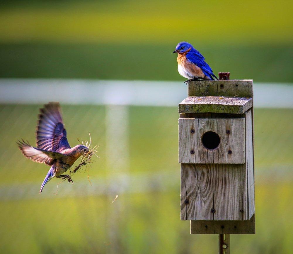 animals-avian-beaks-1156507.jpg
