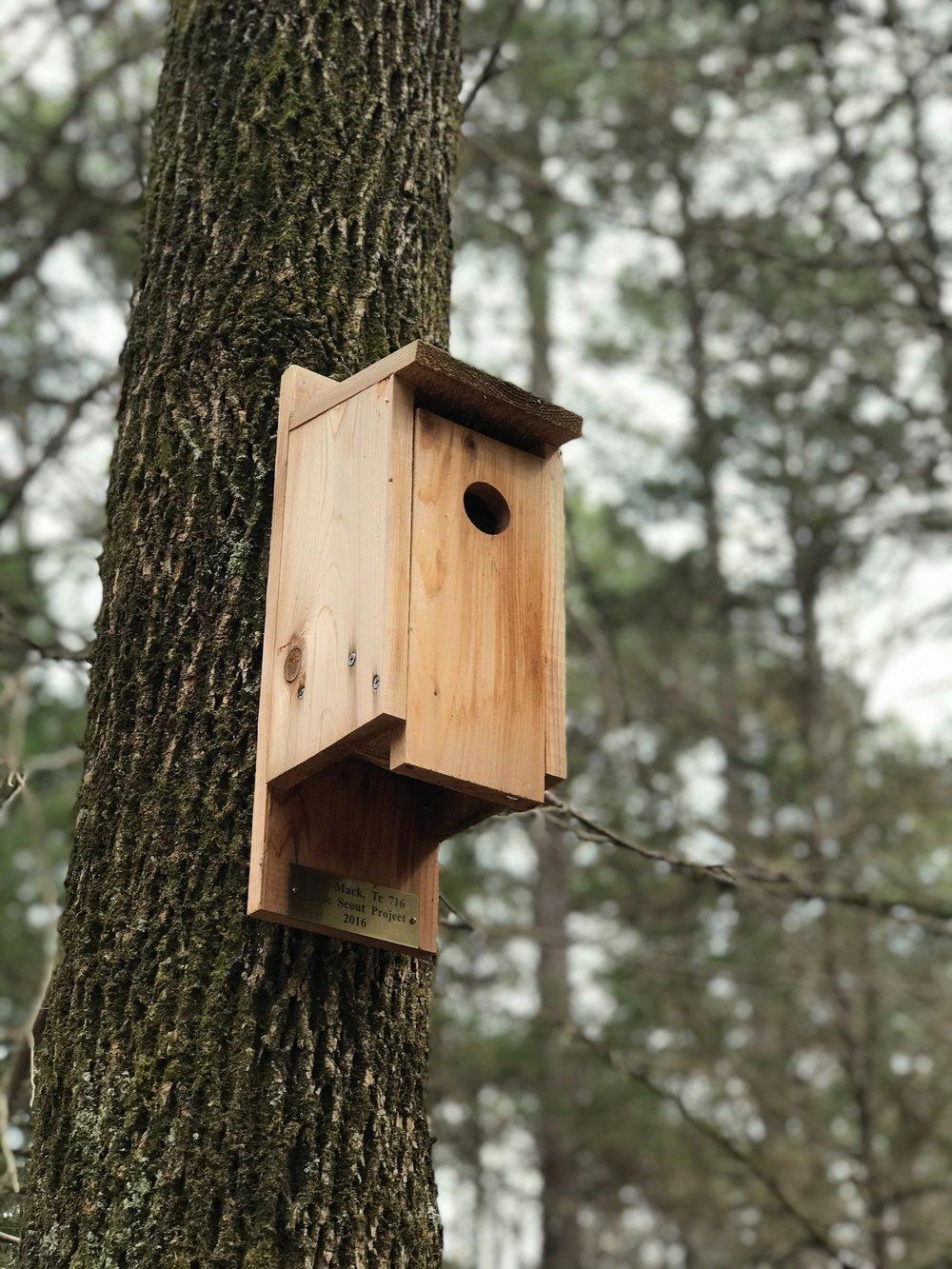 bark-bird-house-birdhouse-1359565.jpg
