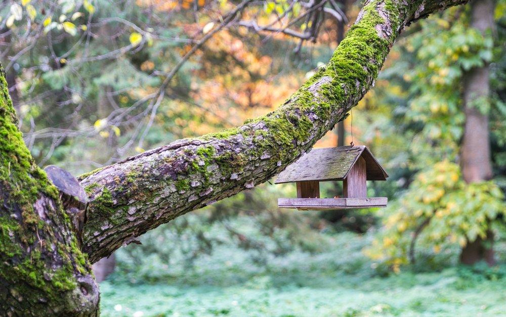 bird-house-blurred-background-branch-754738.jpg