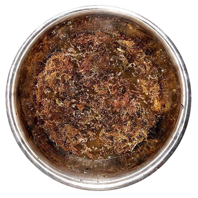 Hvn on Erth will now be incorporating Purple Sea Moss/Irish Sea Moss as a main ingredient in our menu. We honor & want to thank @mrsdrsebi & the King, Dr. Sebi for their knowledge over the years & their legacy towards healing the people. Thank you @purplemossparadise for providing this vital necessity.
