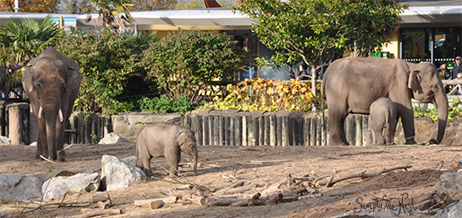 Baby elephants at Chester Zoo - by Simply The Nest, a UK DIY renovation blog