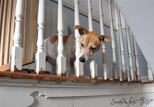 Jack Russell - by Simply The Nest, a UK DIY renovation blog