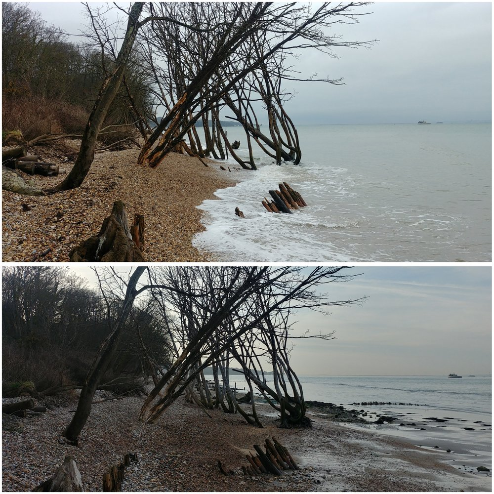 The trees on Bembridge Beach at high and receding tide.