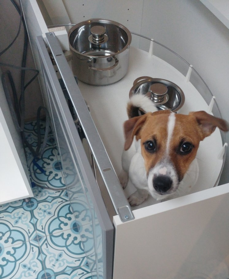 A puppy in a pull-out before we put the worktop on.