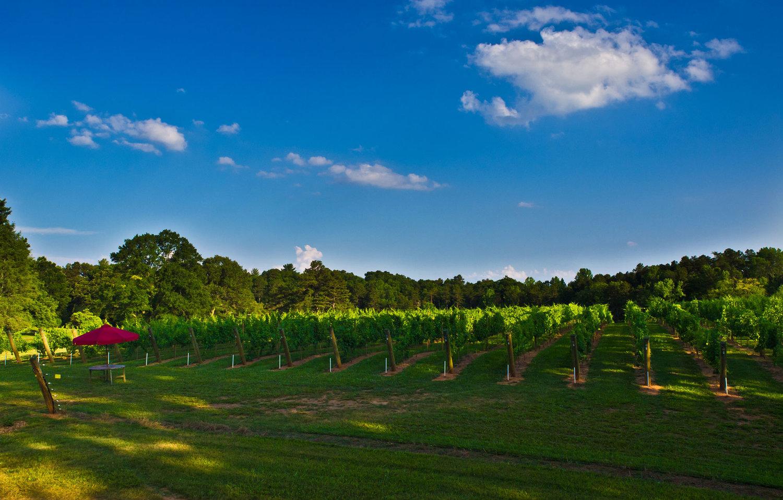hamlet vineyards