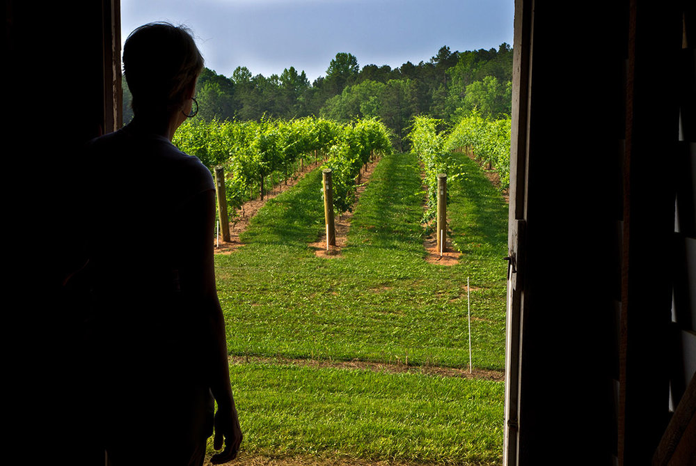 Vineyard-View.jpg