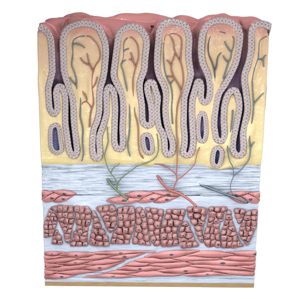 Sugden Medical Illustration - 3D Models