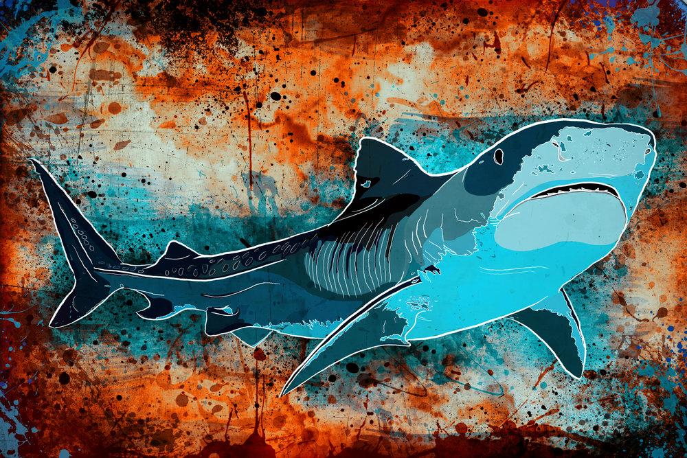 Tiger-Shark1.jpg