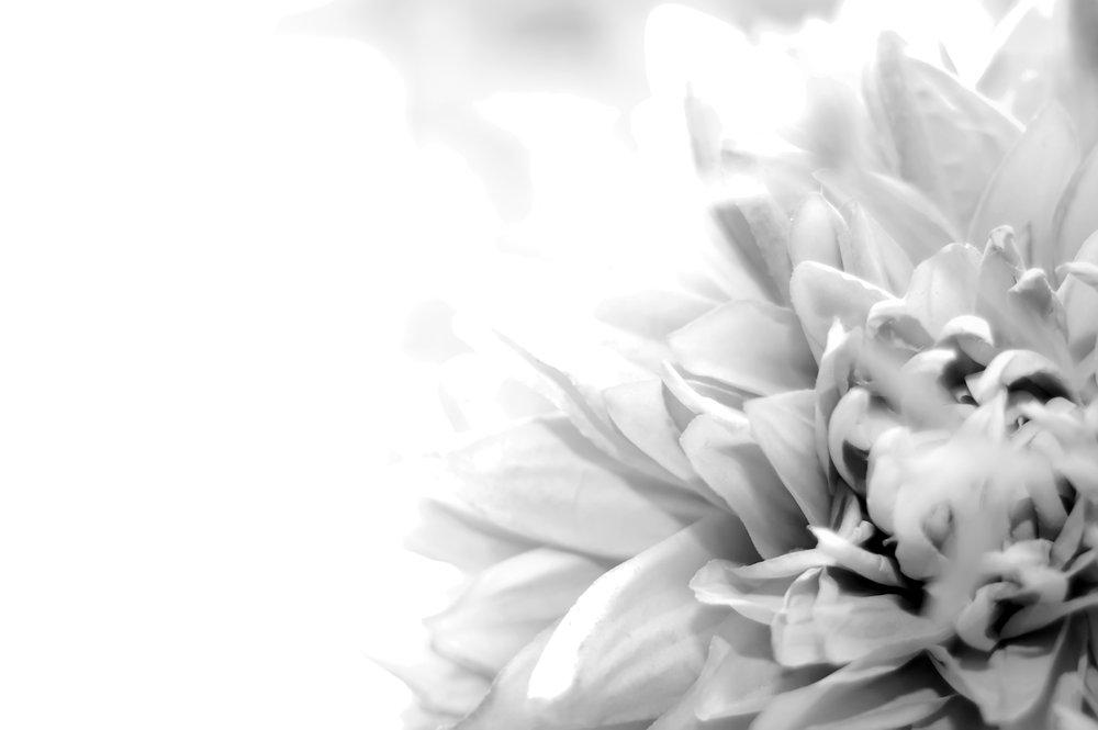 flower bliss.jpg