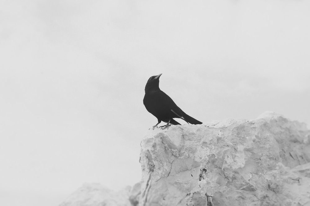 hungry birds.jpg