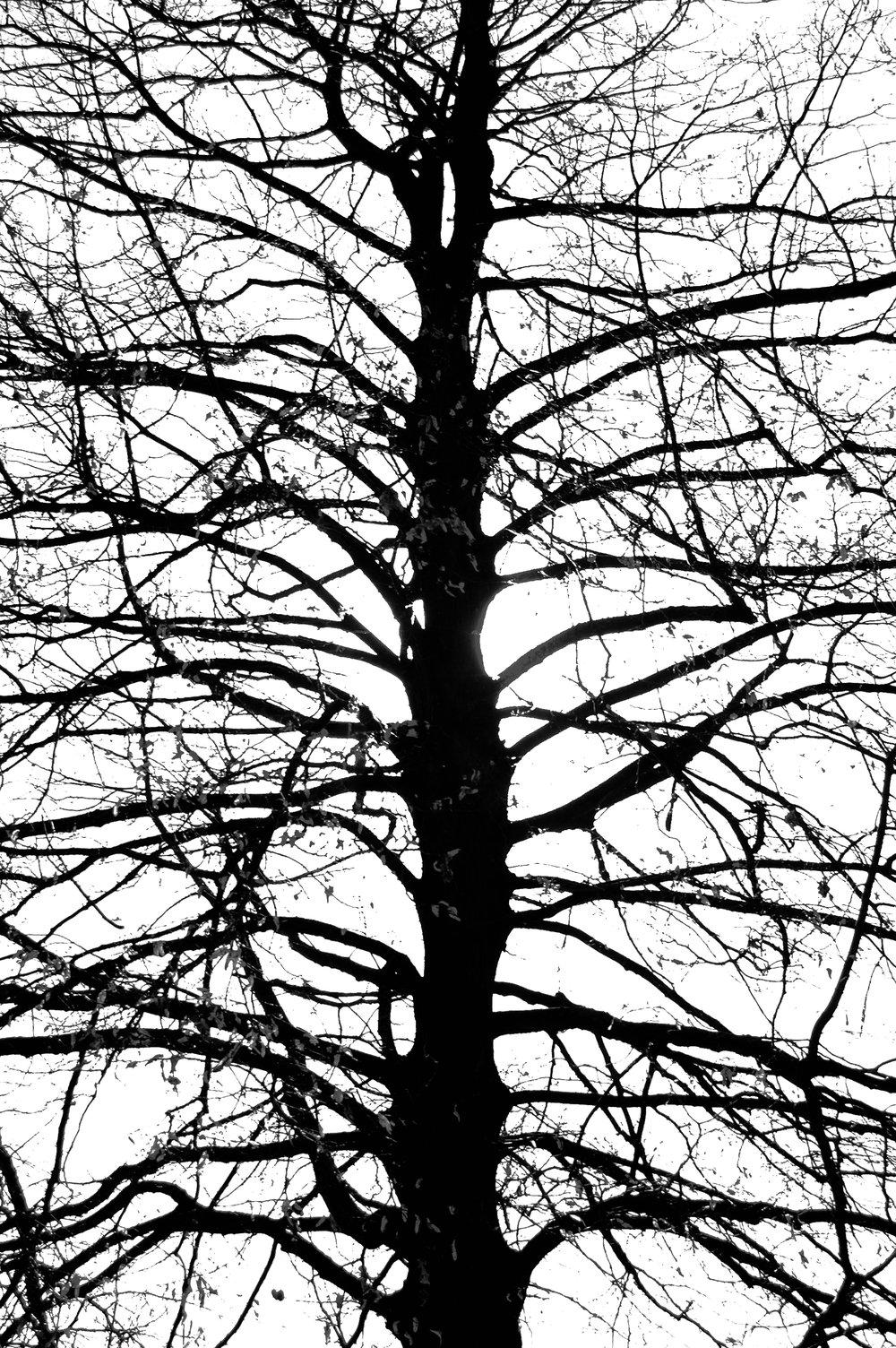 the vines.jpg