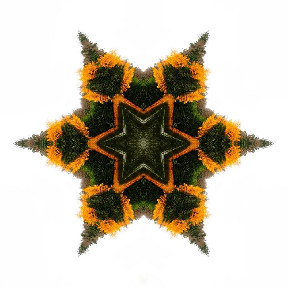 tree star.jpg