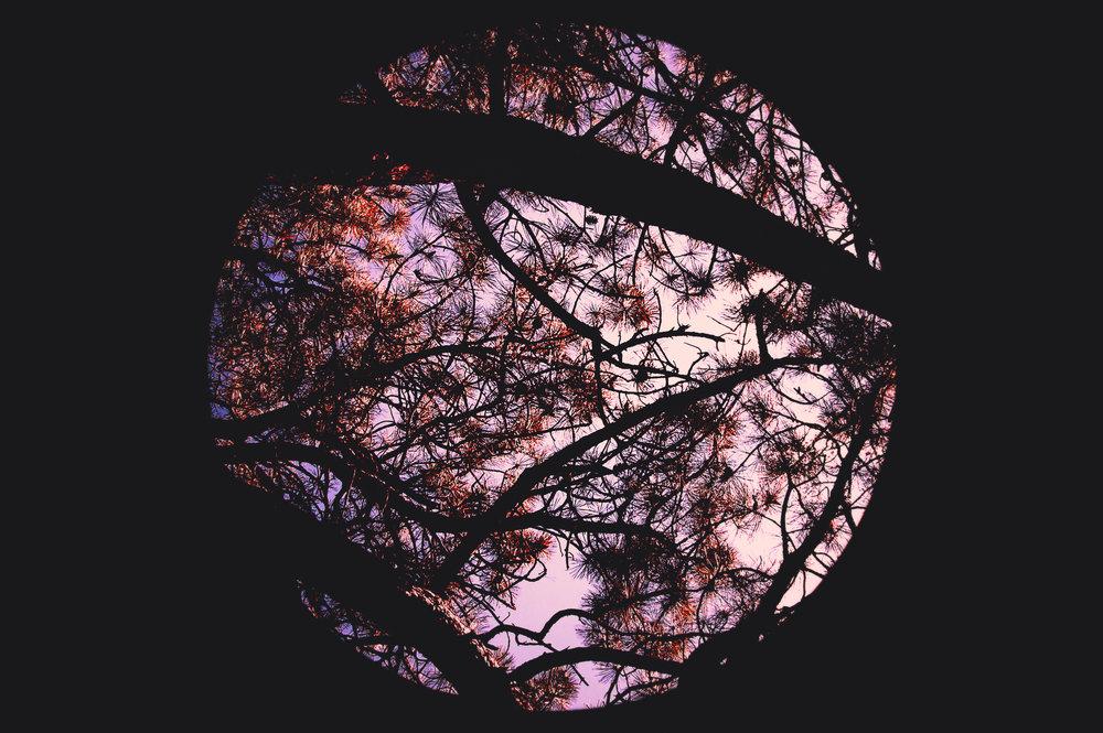 Forever forest.jpg