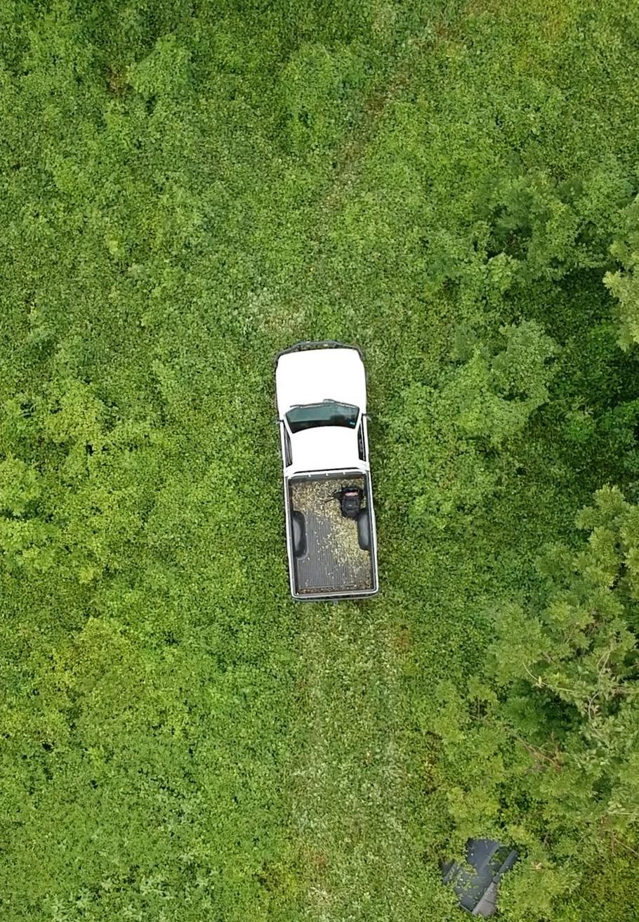 Truck in greenery.jpg