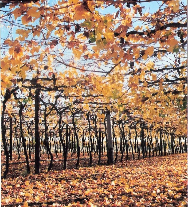 autumn vines - small.jpg