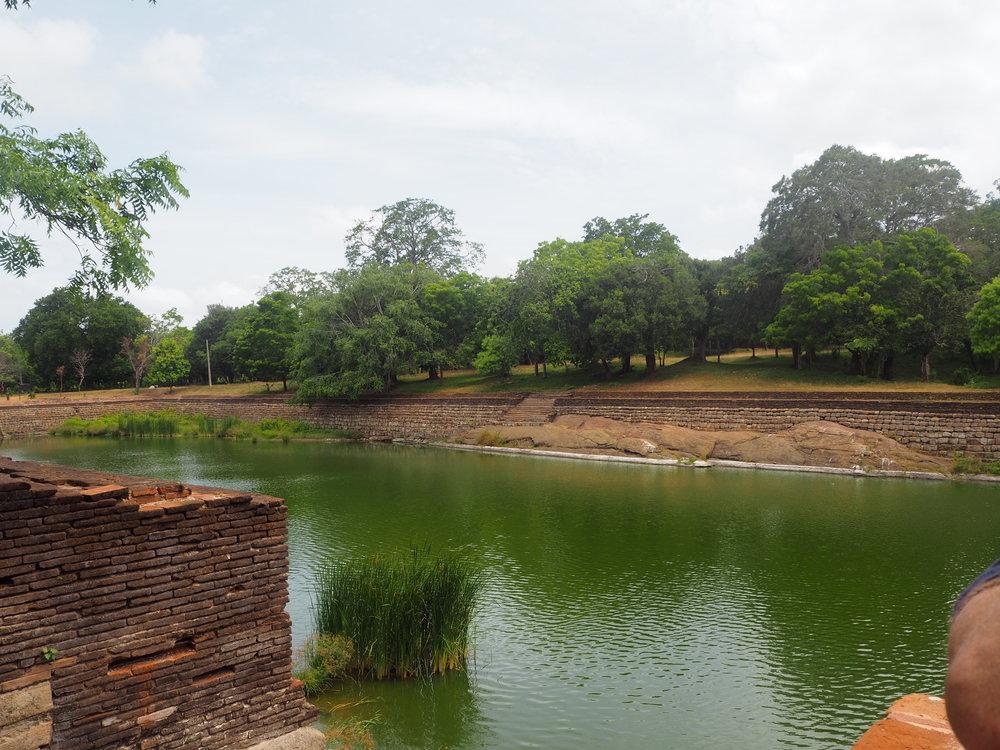 The Elephant Pool