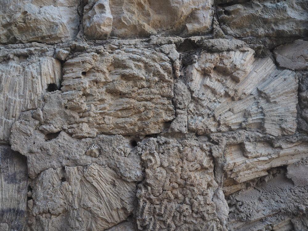 Coral bricks at the Jaffna Fort