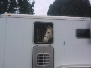 Steady in his new trailer