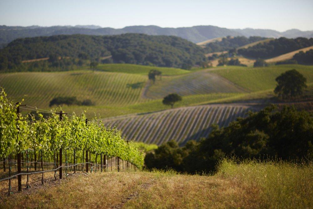 niner-wine-scenic (1).jpg