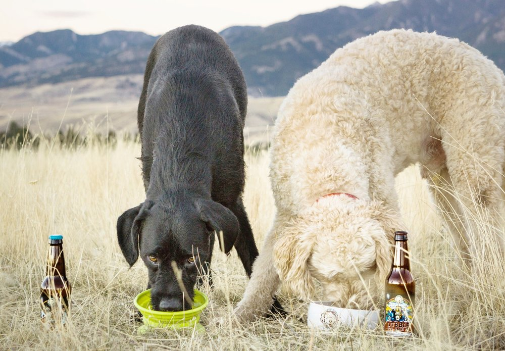 "Obie is one of Bender's best pals and they love drinking ""beer"" together."