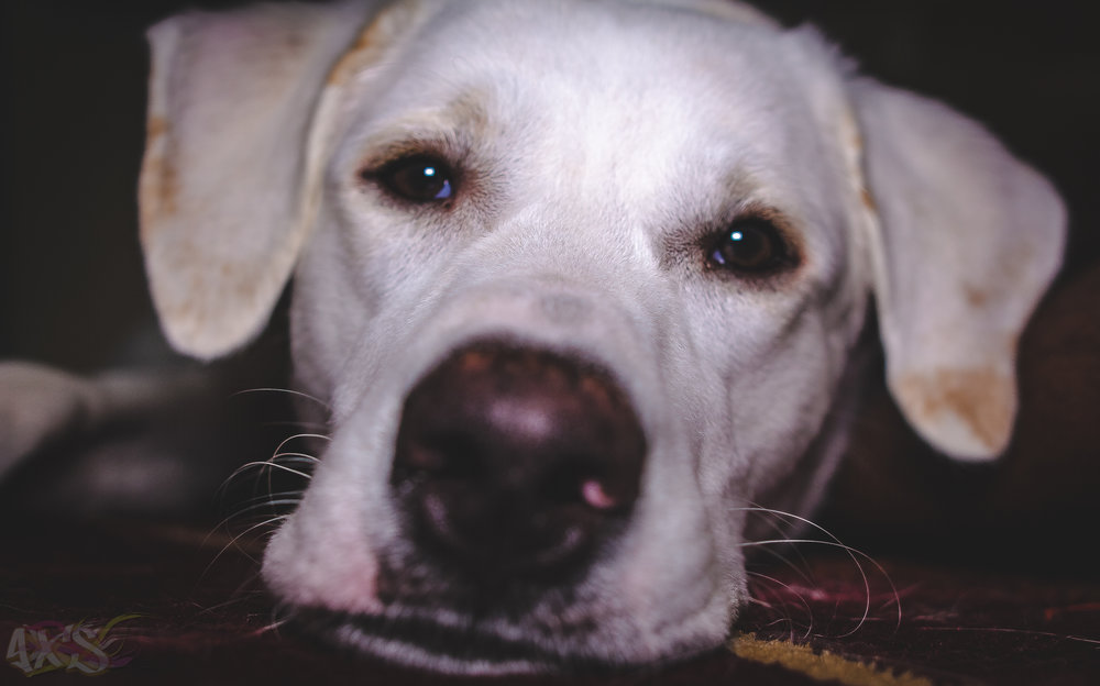 AXS_Dog Dayz.jpg