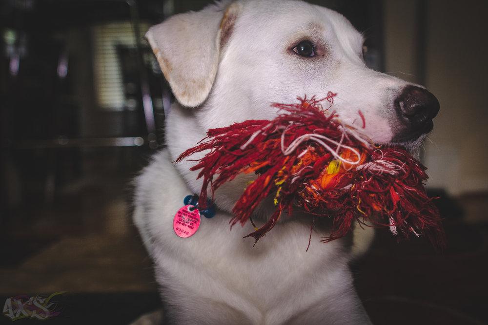 AXS_Dog Dayz-3.jpg