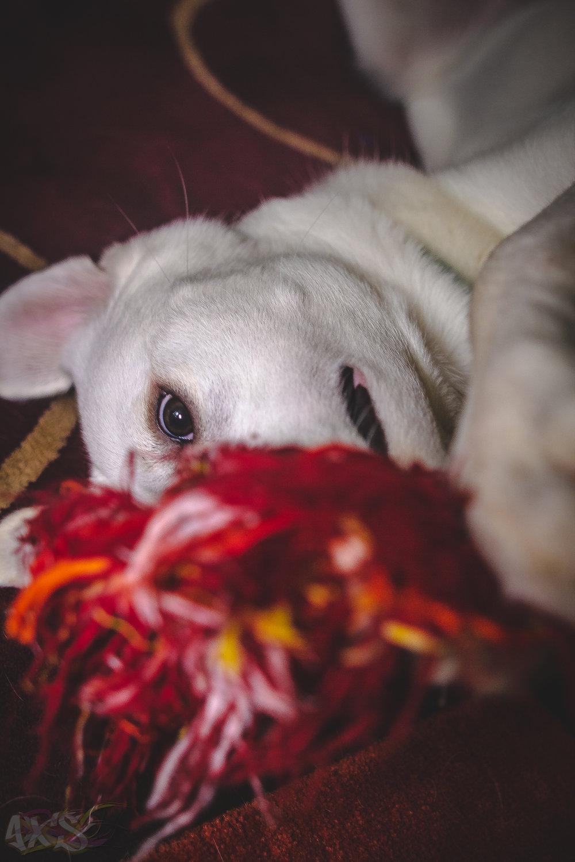 AXS_Dog Dayz-9.jpg