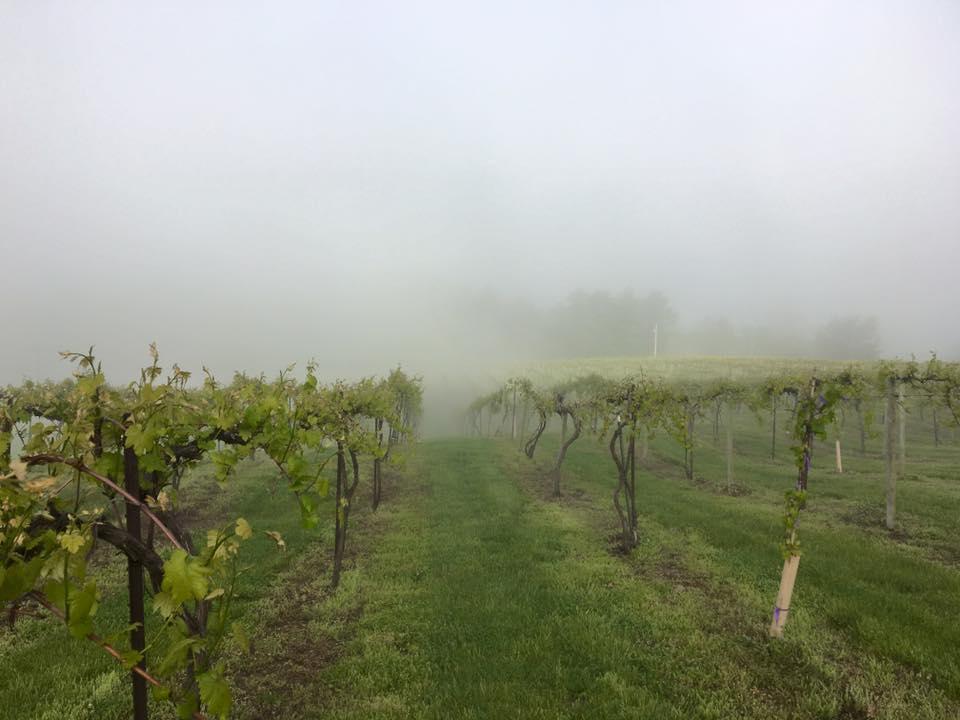 LesBourgeois Vineyard