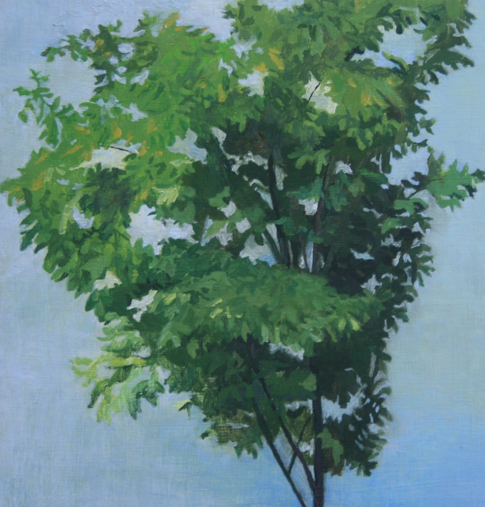 Tree and sky 1, Oil on panel, 12 x 12 in, 2015