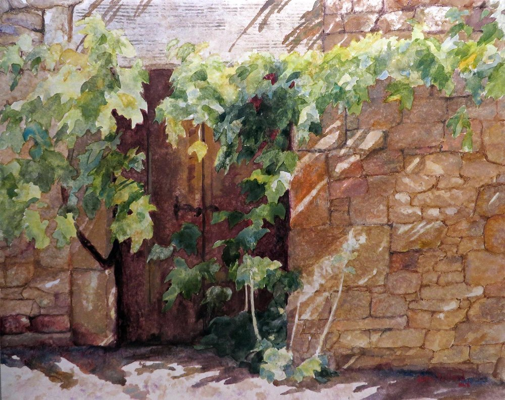 Provence Vine Shadows