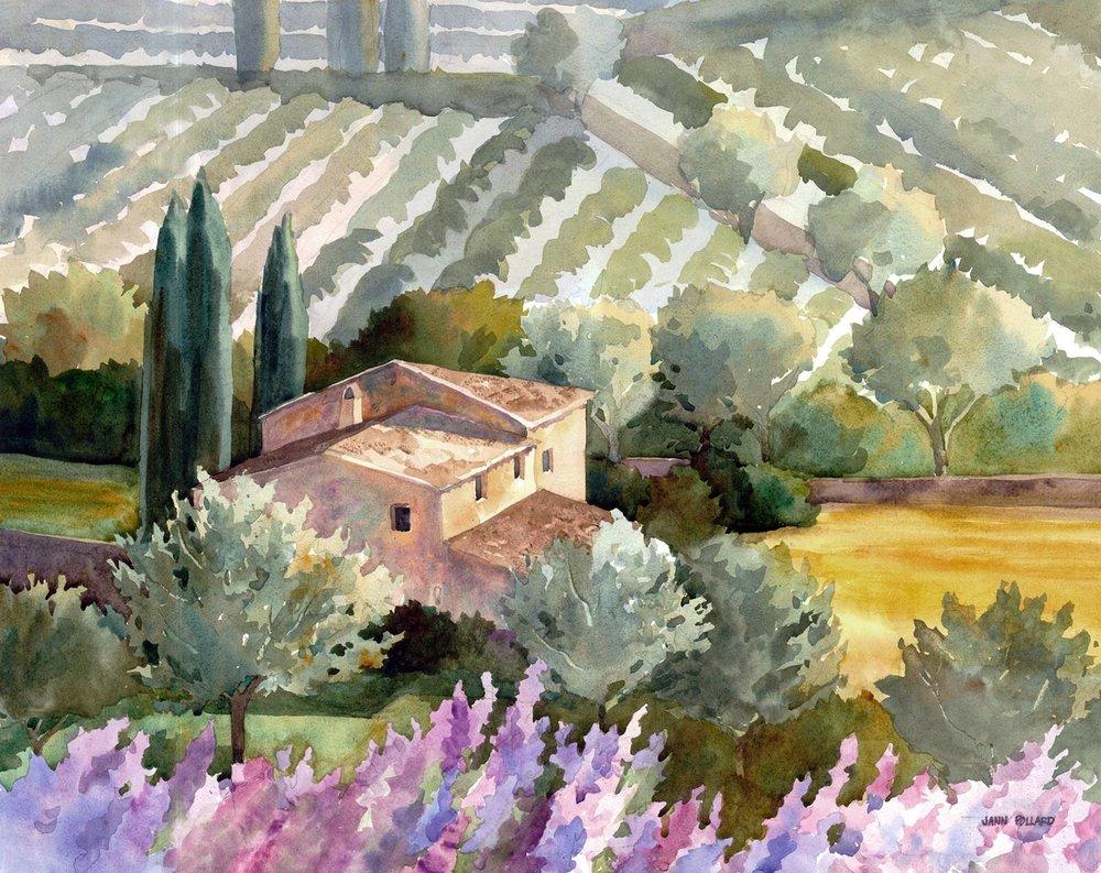 A Vineyard in Tuscan