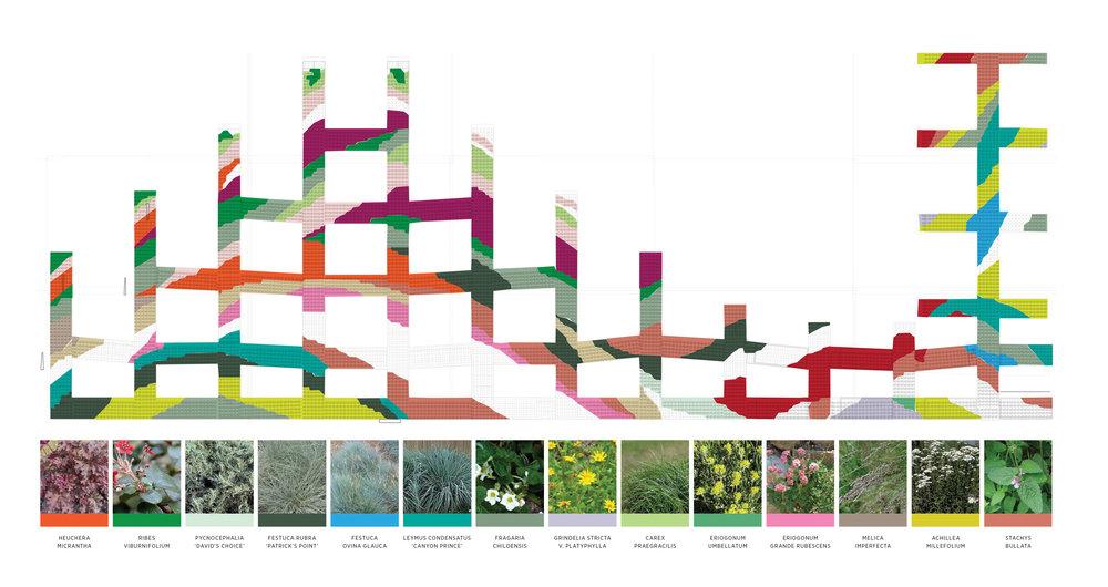 IAC_plantingdiagram.jpg