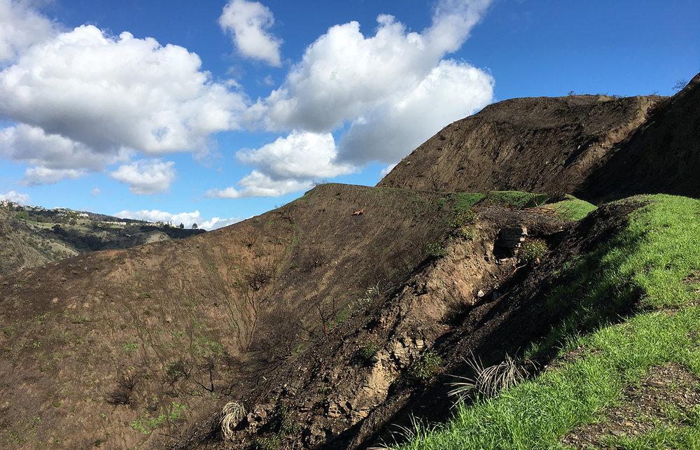dotted hillside.jpg